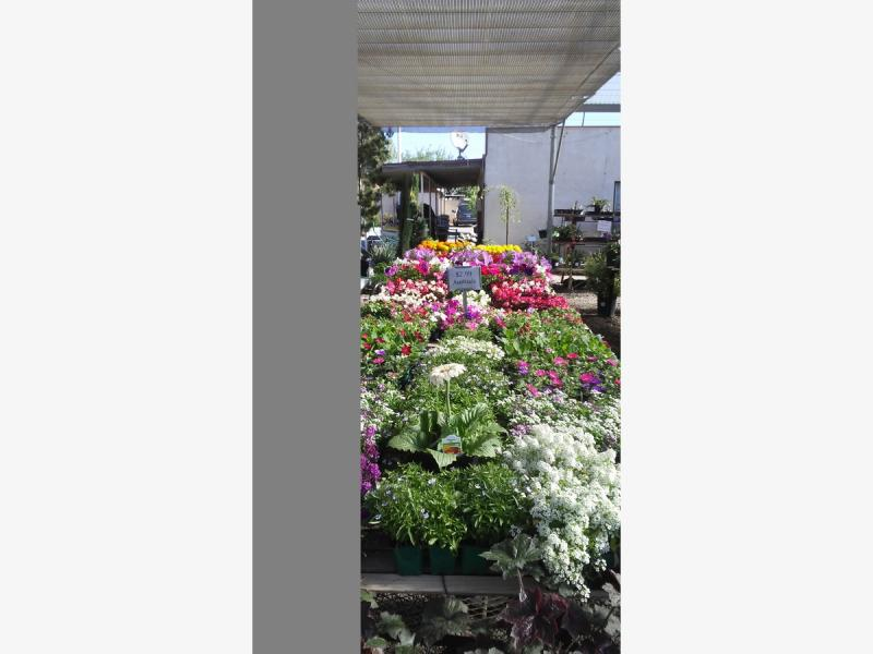 Flowers and Veggie Starter Packs 15% Off at the Beaumont Garden Center