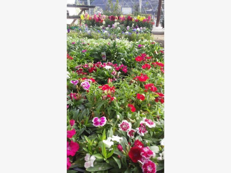 Fall Garden Veggies & Flowers at the Beaumont Garden Center
